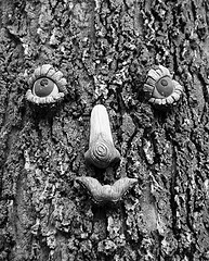face on tree trunk